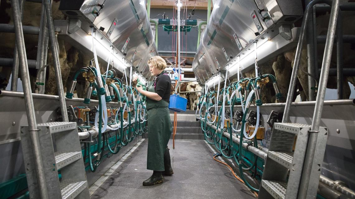Winning back the precious gift of time thanks to a GEA side-by-side milking parlor with vertical lift