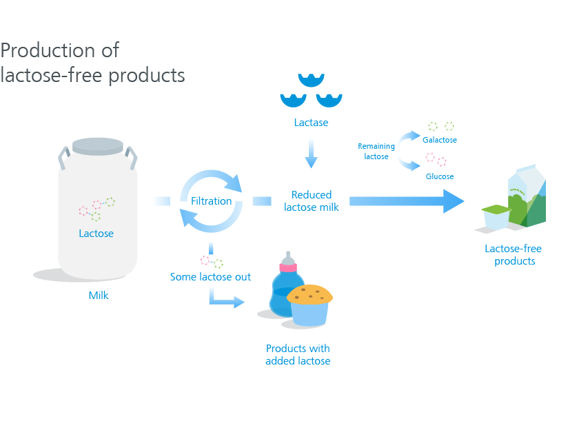 Production of lactose-free products