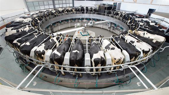 24-7 Milking with a Rotary Milking System