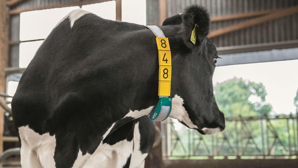 Activity Detection CowScout