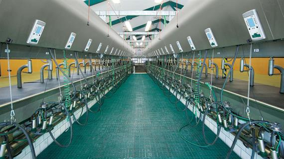 Conventional Milking Farm