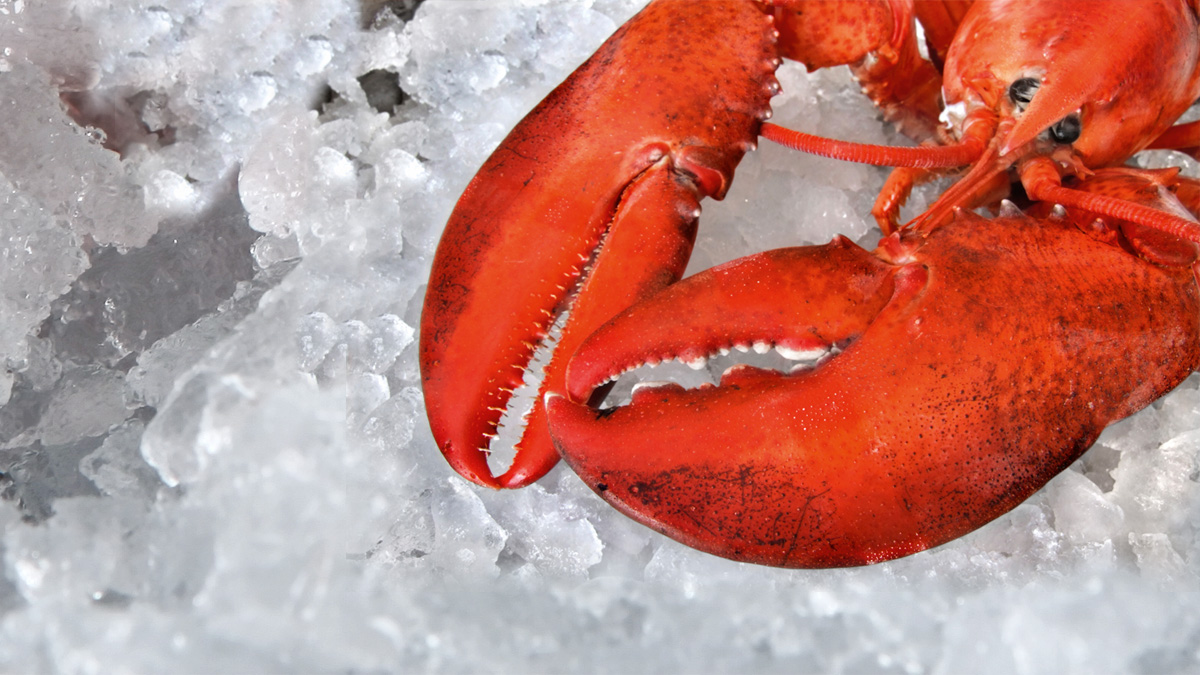 New header_Lobster left