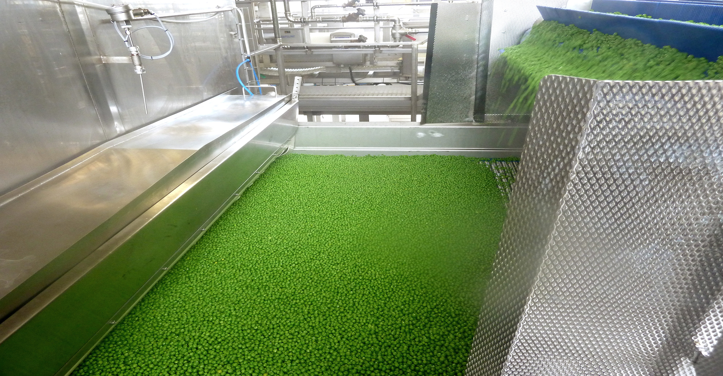 Tunnel freezer processing peas