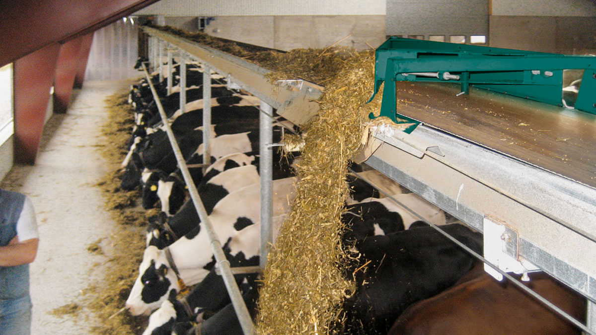 Automatic Feeding Belt Feeder