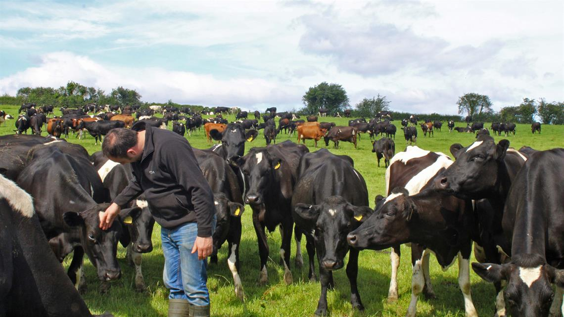 GEA iFLOW - Milking a herd of 300 cows in a quarter of the time with one person