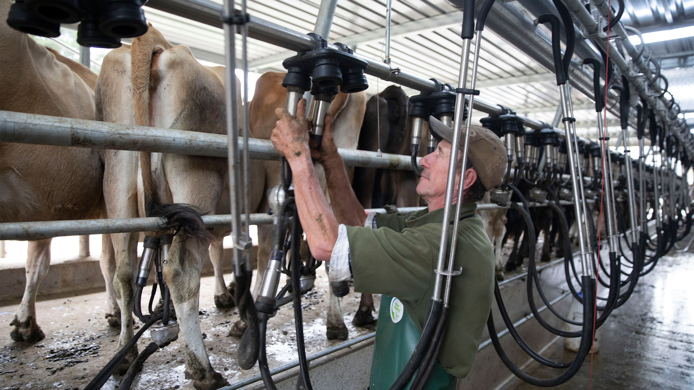 Drive efficiency GEA iXPRESS heringbone conventional milking