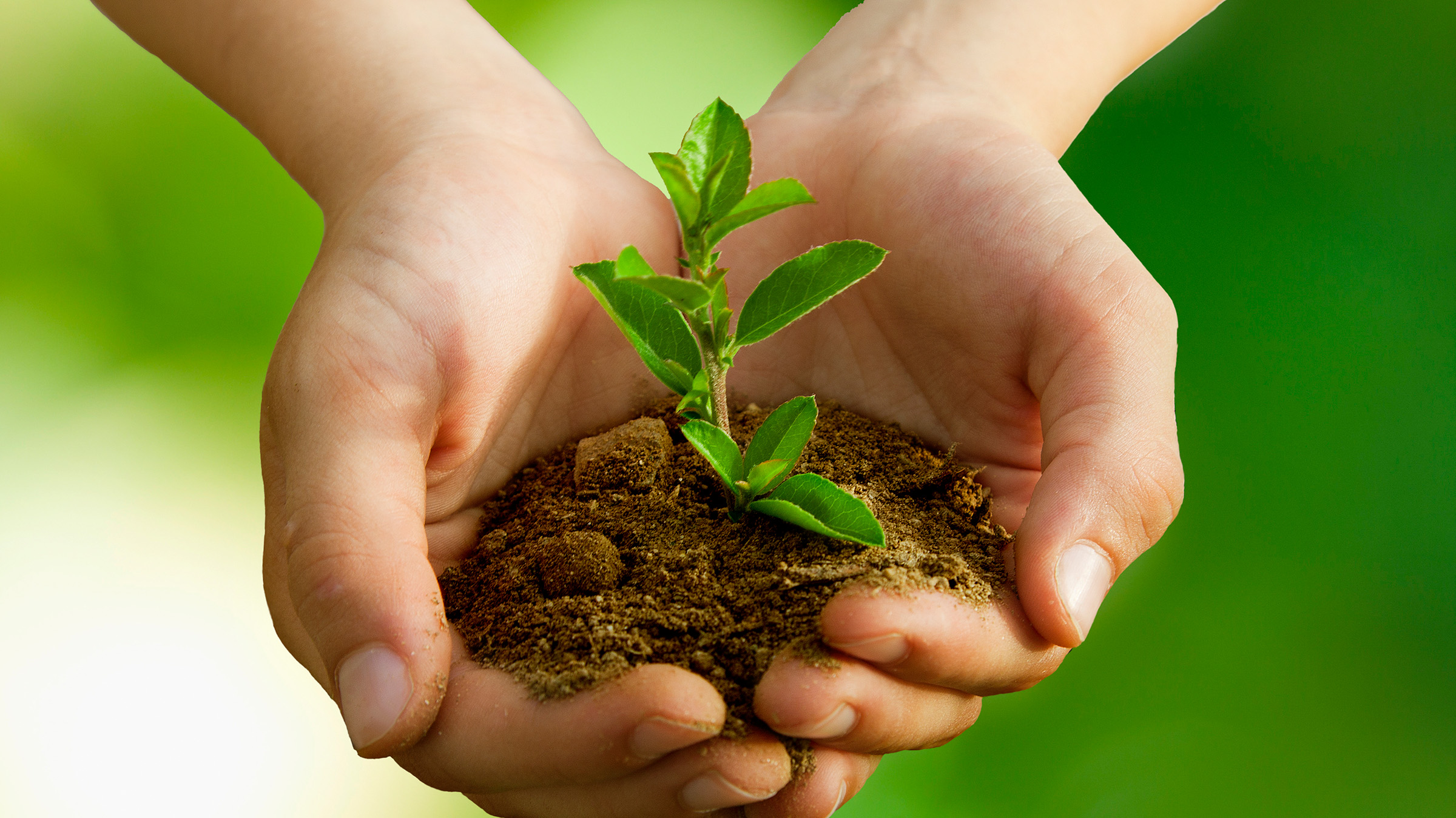 Hands cradling small green plant in soil