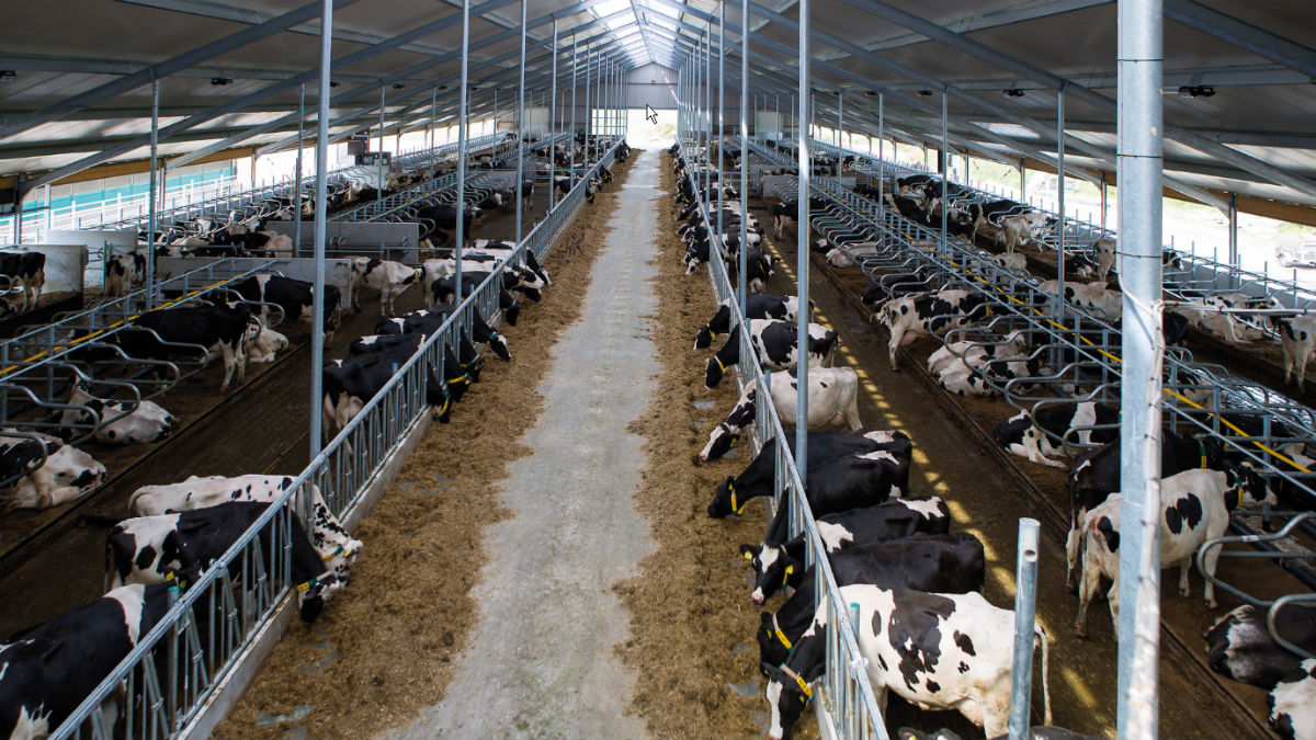 Improved cow comfort and increased safety with new cubicle GEA DairyBarn B3130 and new feed fence GEA DairyBarn B3525