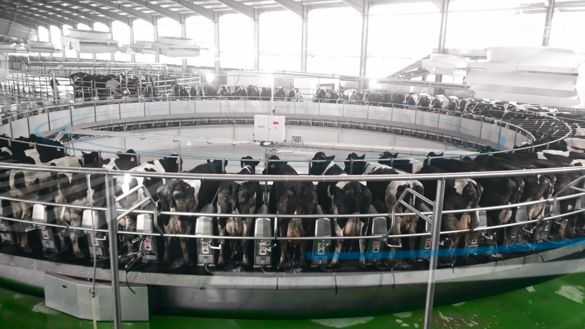 GEA has installed and commissioned the largest milking rotary parlor in China at Lvyuan Farm in Lianyungang which milks 10,000 cows. (Photo: GEA)